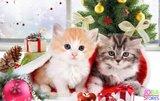 Diamond Painting Kerst Kittens 30x40 - rond_