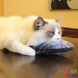 OP=OP Catnip Vis 05 30cm (2 stuks) Kattenspeelgoed met kattenkruid_