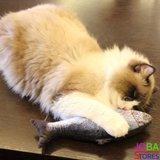 OP=OP Catnip Vis 03 20cm (2 stuks) Kattenspeelgoed met kattenkruid_