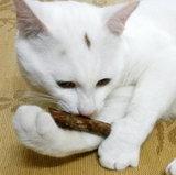 Matatabi kauw stokjes (10 stuks)_
