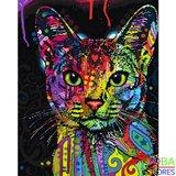 Schilderen op nummer Gekleurde Kat 40x50cm_