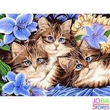 Schilderen op nummer Katjes 40x50cm_