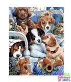 Schilderen op nummer Puppies 40x50cm_