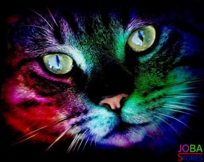 Diamond Painting Colorful Cat 40x50cm
