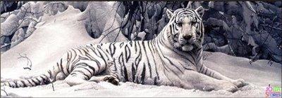 Diamond Painting Witte Tijger 150x50cm