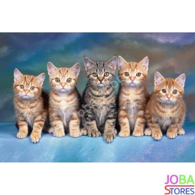 Diamond Painting Kittens 40x60cm