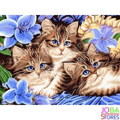 Schilderen op nummer Katjes 40x50cm (inclusief lijst)