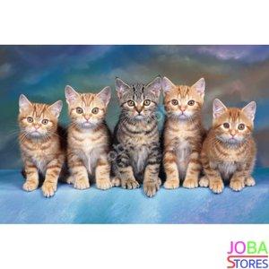 "Diamond Painting ""JobaStores®"" Kittens - volledig - 40x60cm"
