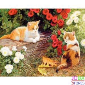 Schilderen op nummer Katten 40x50cm (inclusief lijst)